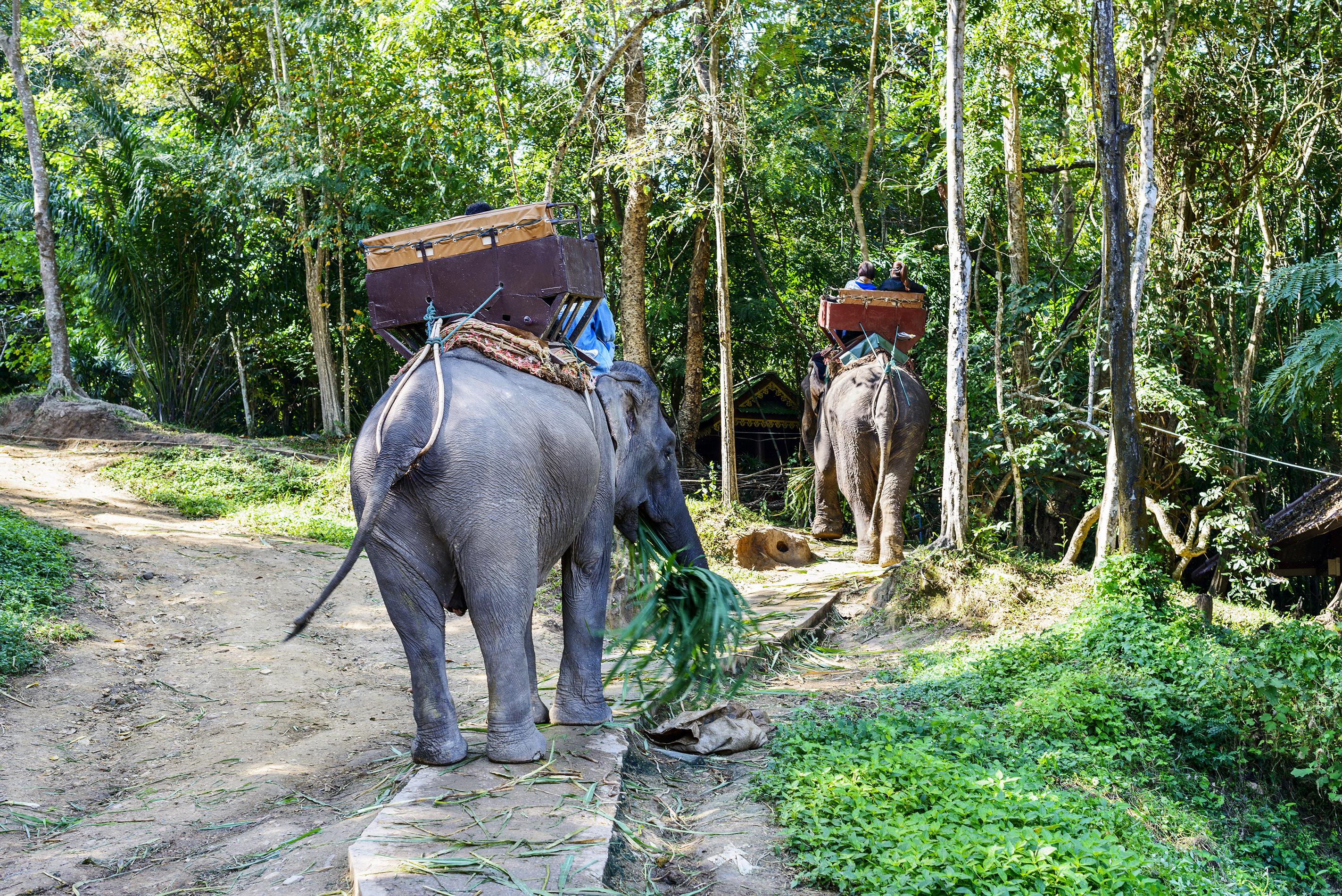 Una experiencia inolvidable entre elefantes - Tailandia Gran Viaje Alrededor de Tailandia