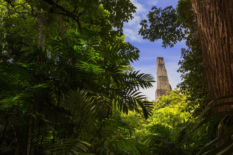 Tikal, un lugar de película - Guatemala Gran Viaje Siguiendo el Quetzal