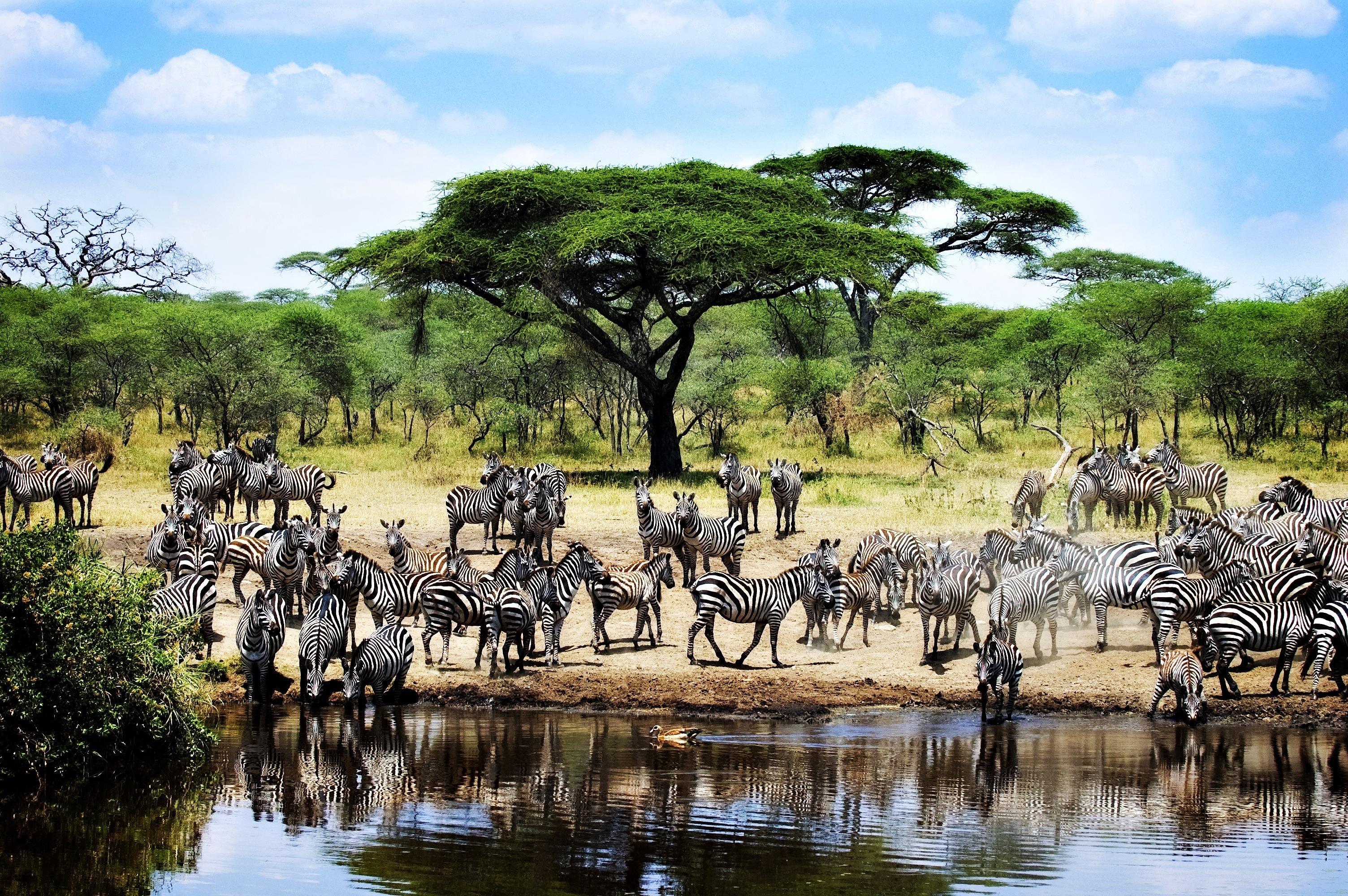 La principal atracción de Tanzania - Tanzania Safari Tierras de Tanzania