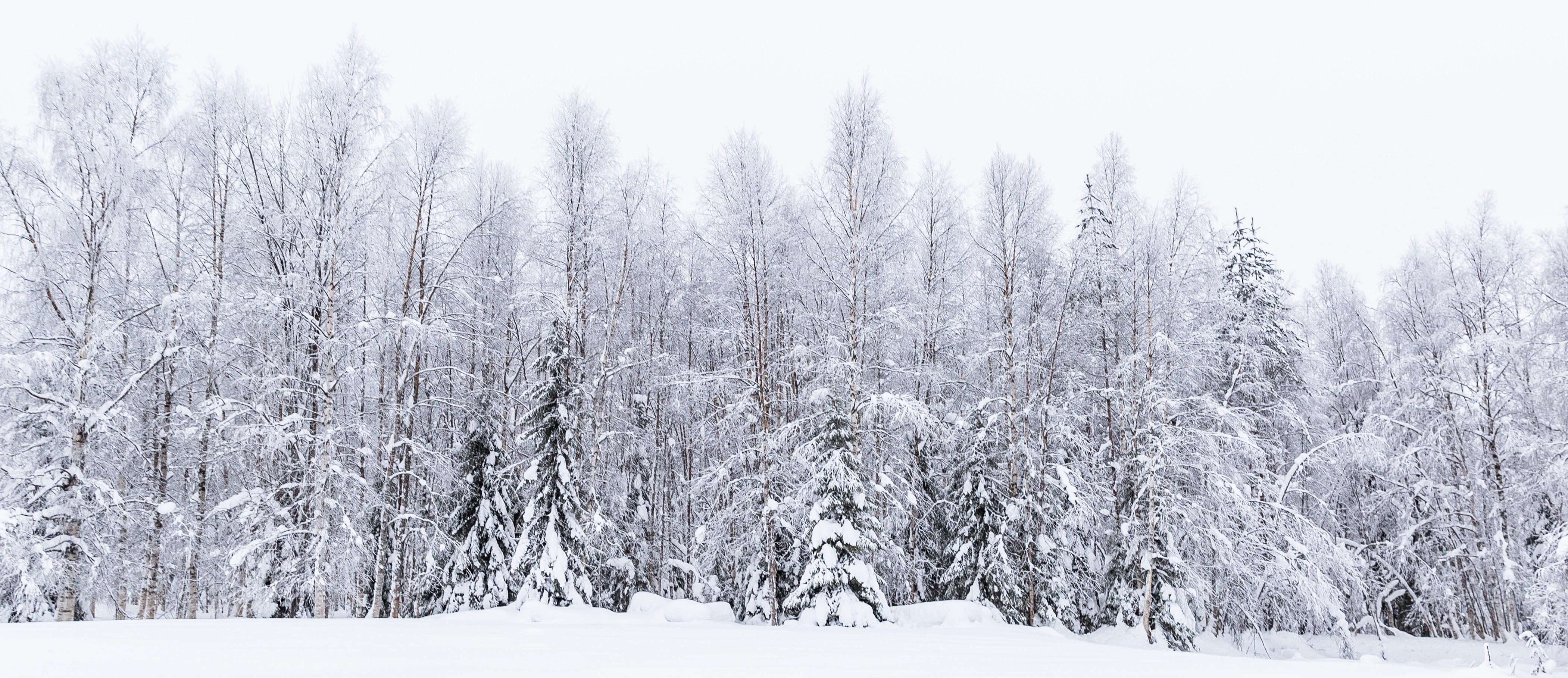 Un día inolvidable con Santa Claus y los elfos - Finlandia Circuito Laponia y Rovaniemi desde Málaga