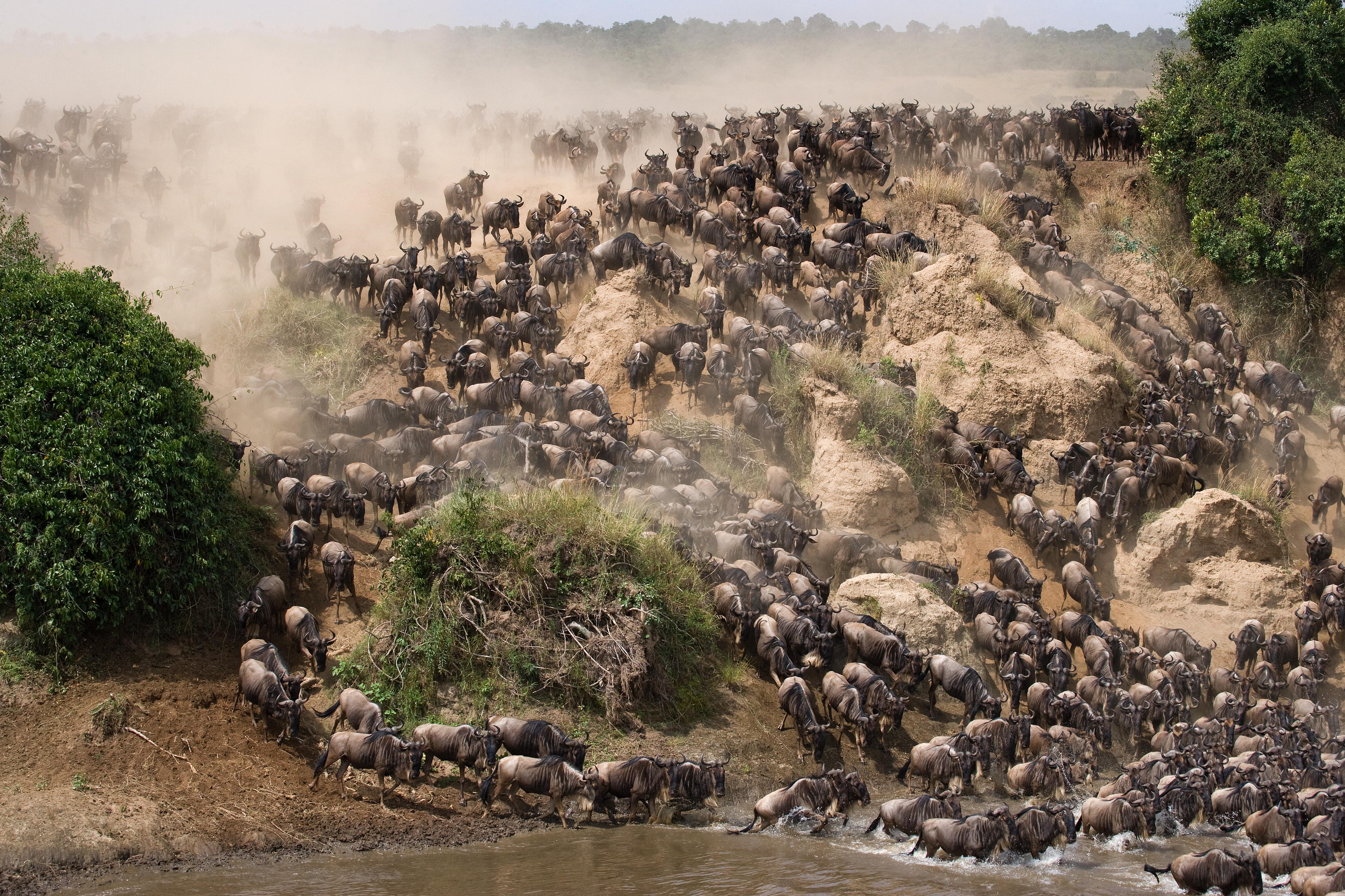 La esencia del África salvaje - Kenia Safari Safari Kenia y Tanzania: Serengeti