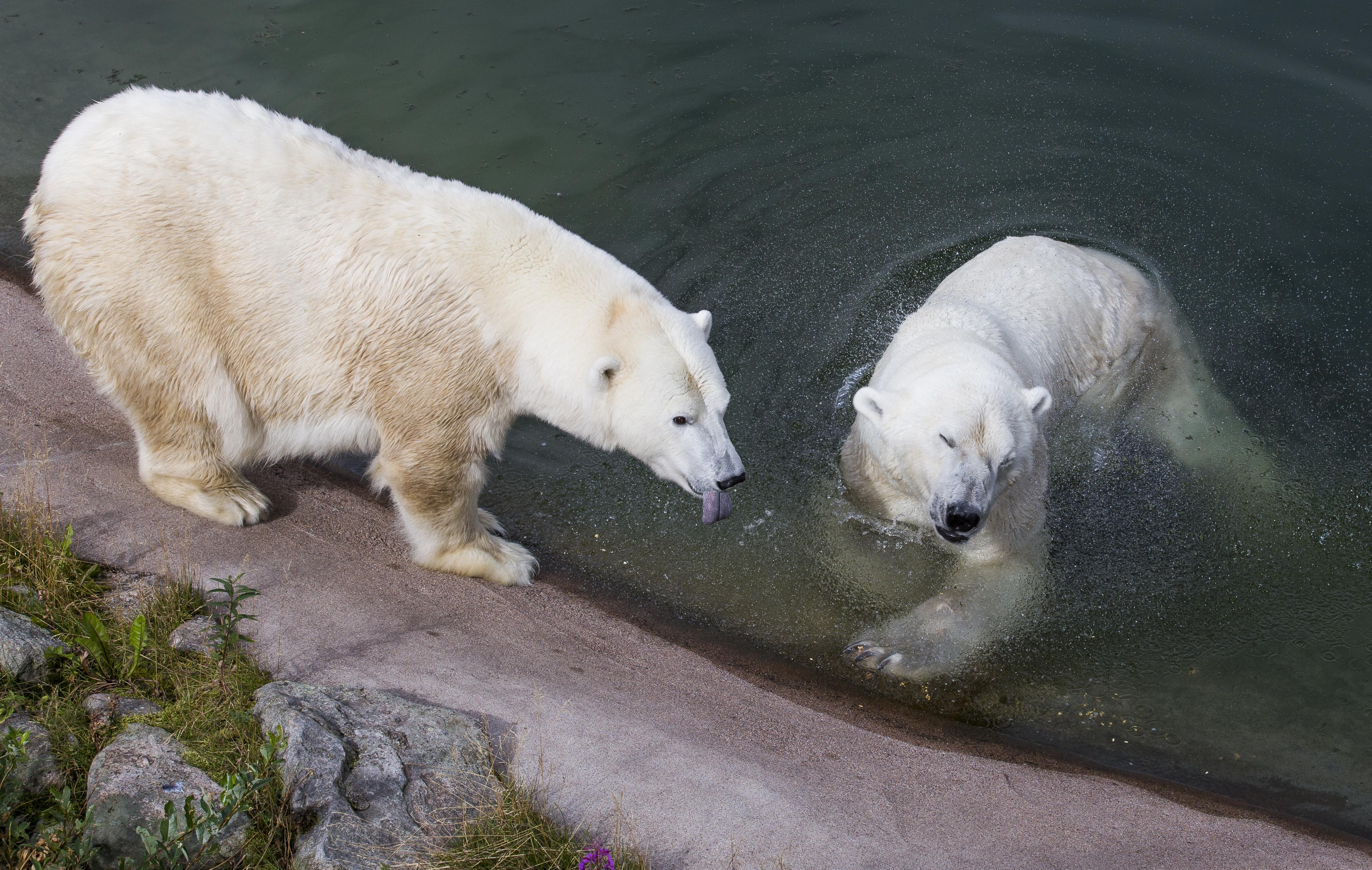 Visitar el zoológico que se encuentra más al norte del planeta - Finlandia Circuito Laponia e Iso-Syöte