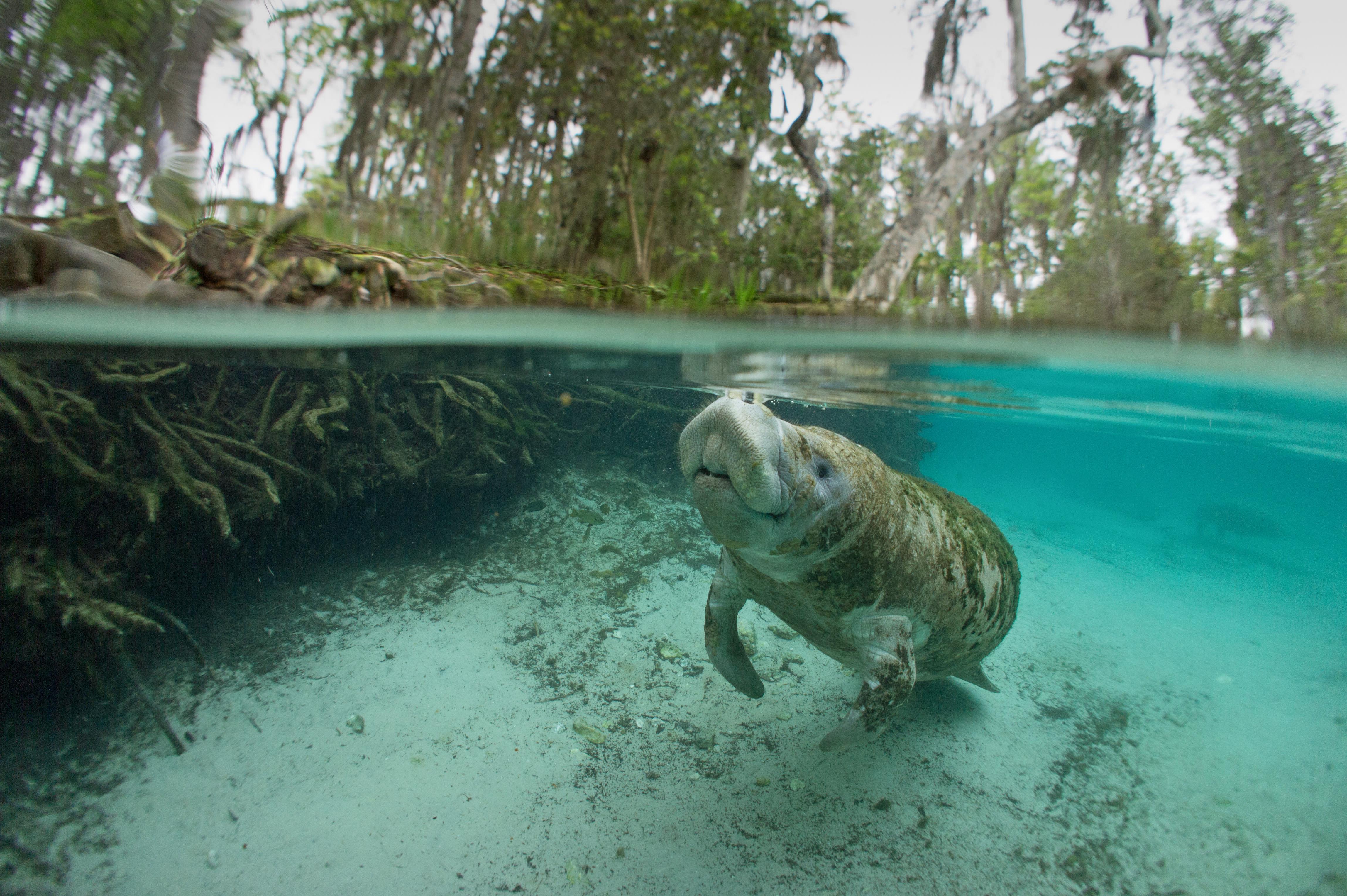 Encuentra al elefante del mar - Costa Rica Gran Viaje Costa Rica Indispensable y Manuel Antonio