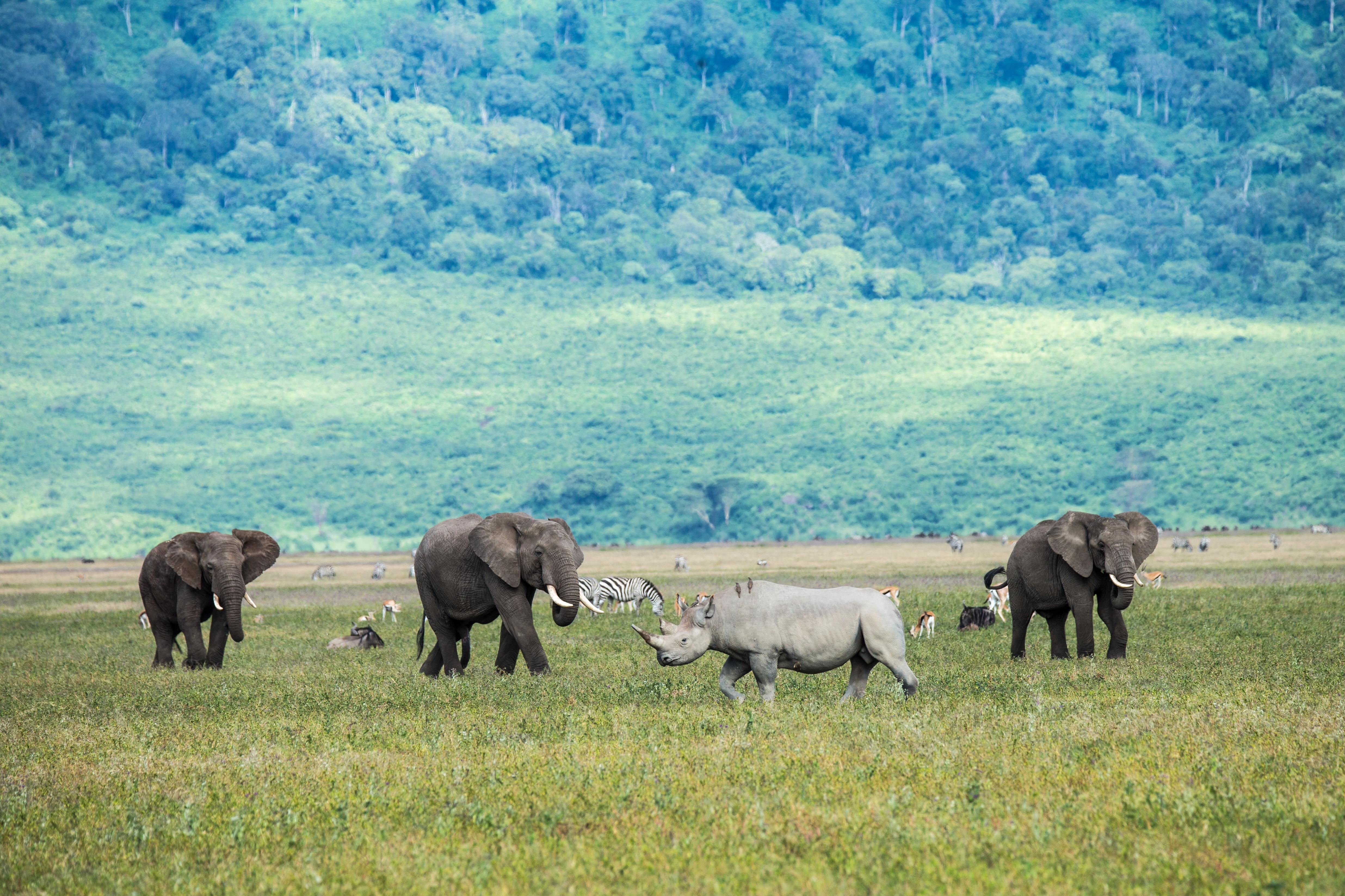 Una reserva ecológica única en el cráter de un volcán - Kenia Safari Safari Kenia y Tanzania: Ngorongoro