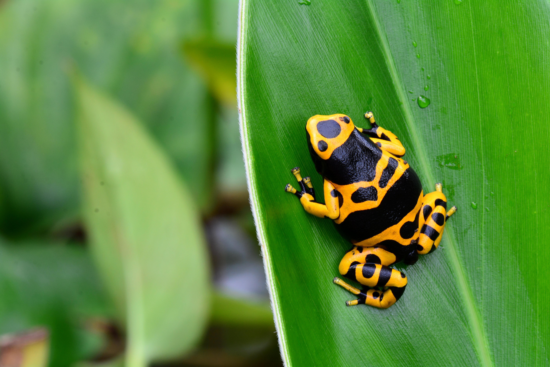 El lugar ideal para los anfibios - Costa Rica Gran Viaje Tortuguero, Arenal y Monteverde