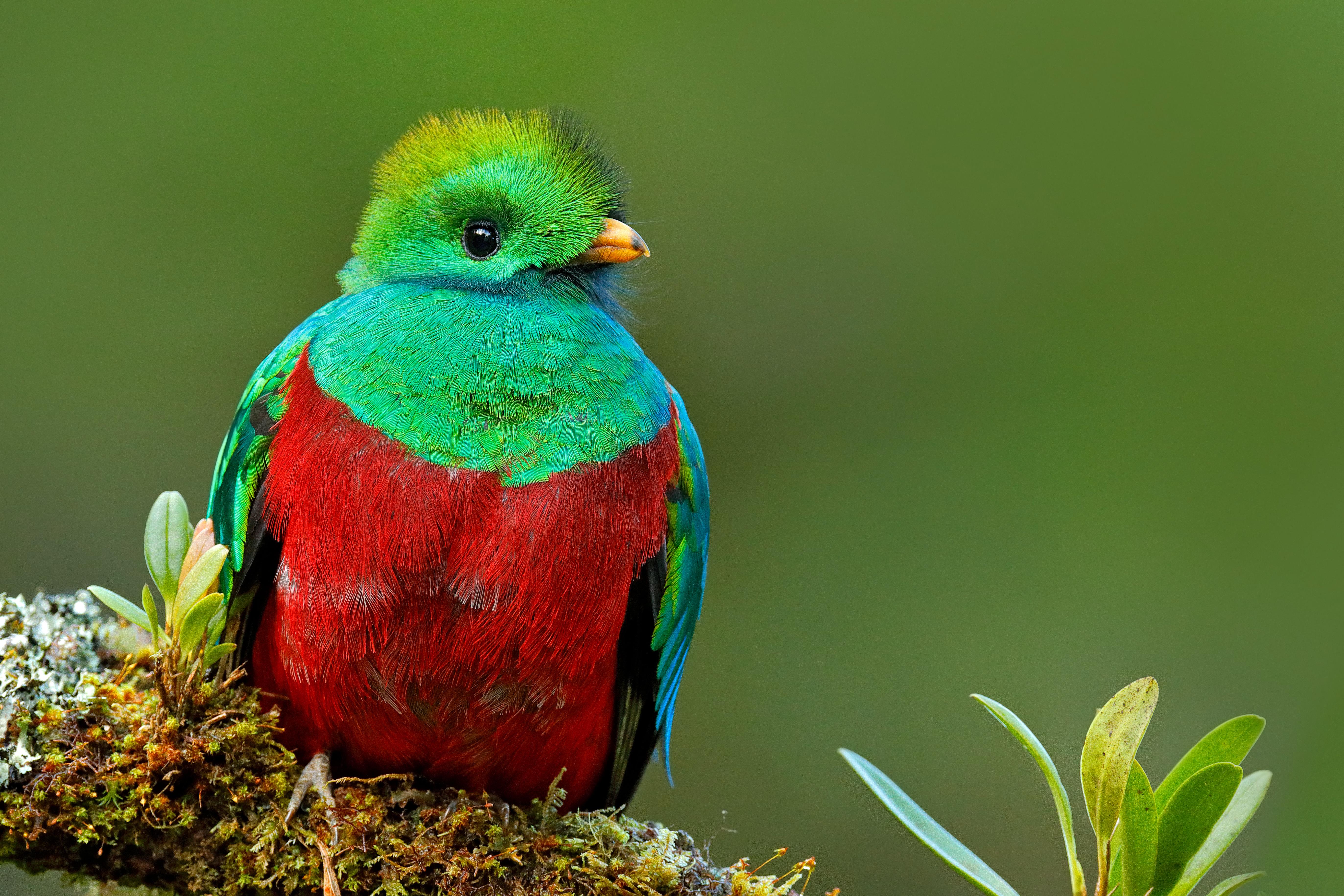 En busca del quetzal - Guatemala Gran Viaje Siguiendo el Quetzal