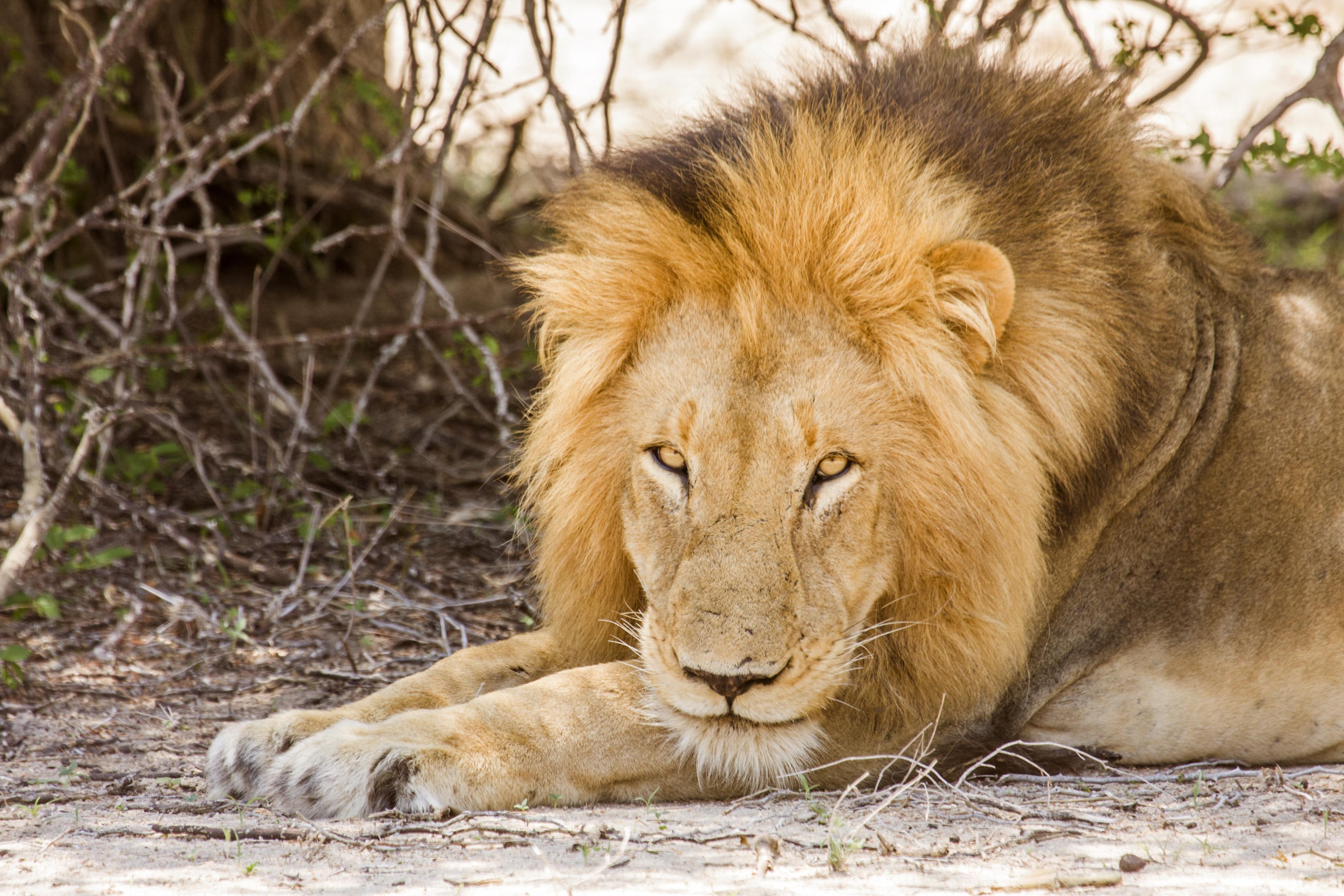 Los cinco grandes en un entorno de cinco estrellas - Sudáfrica Safari Parques de Sudáfrica y Cataratas Victoria