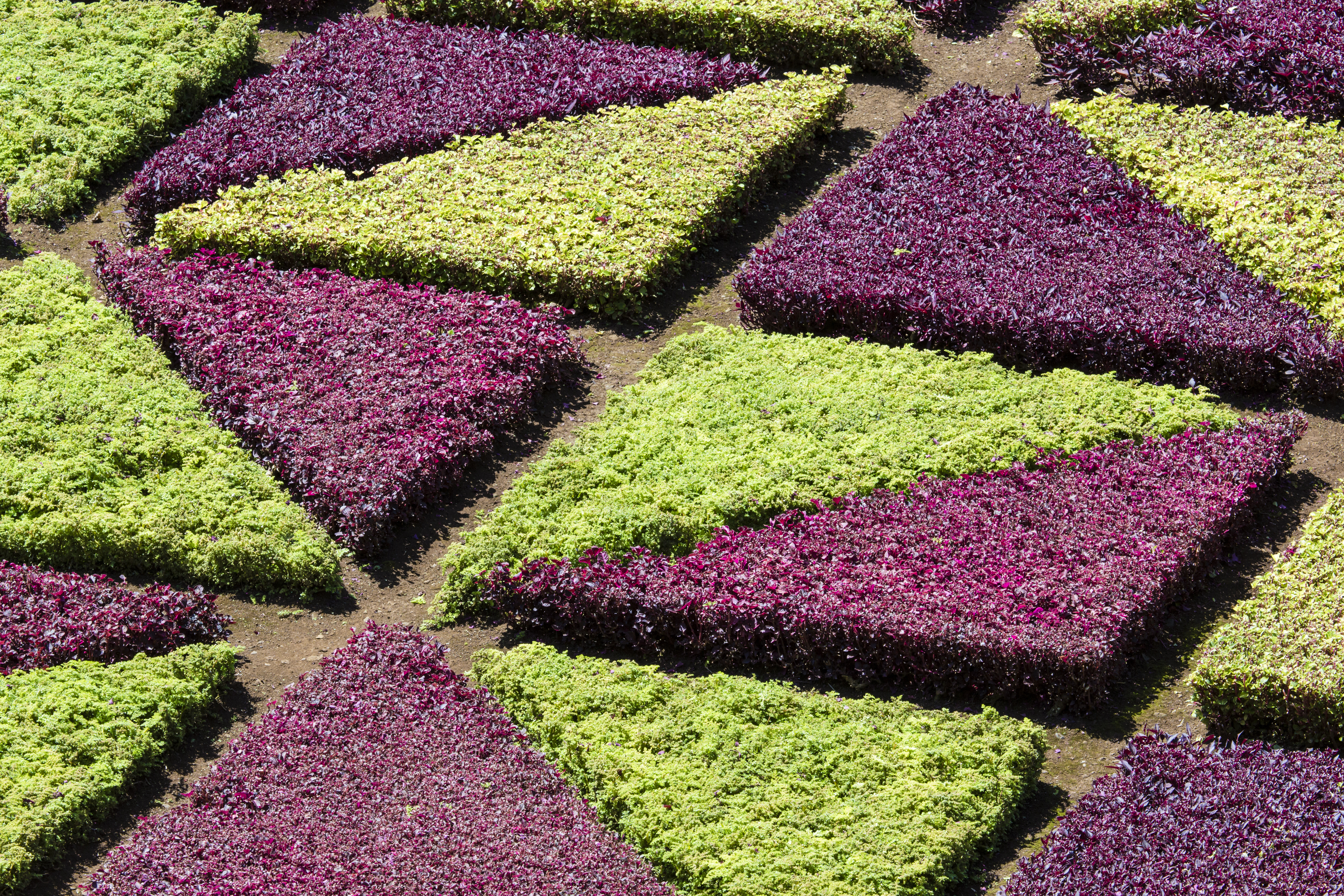 Excepcional Uñas Flores Molino Inspiración - Ideas Para Pintar Uñas ...