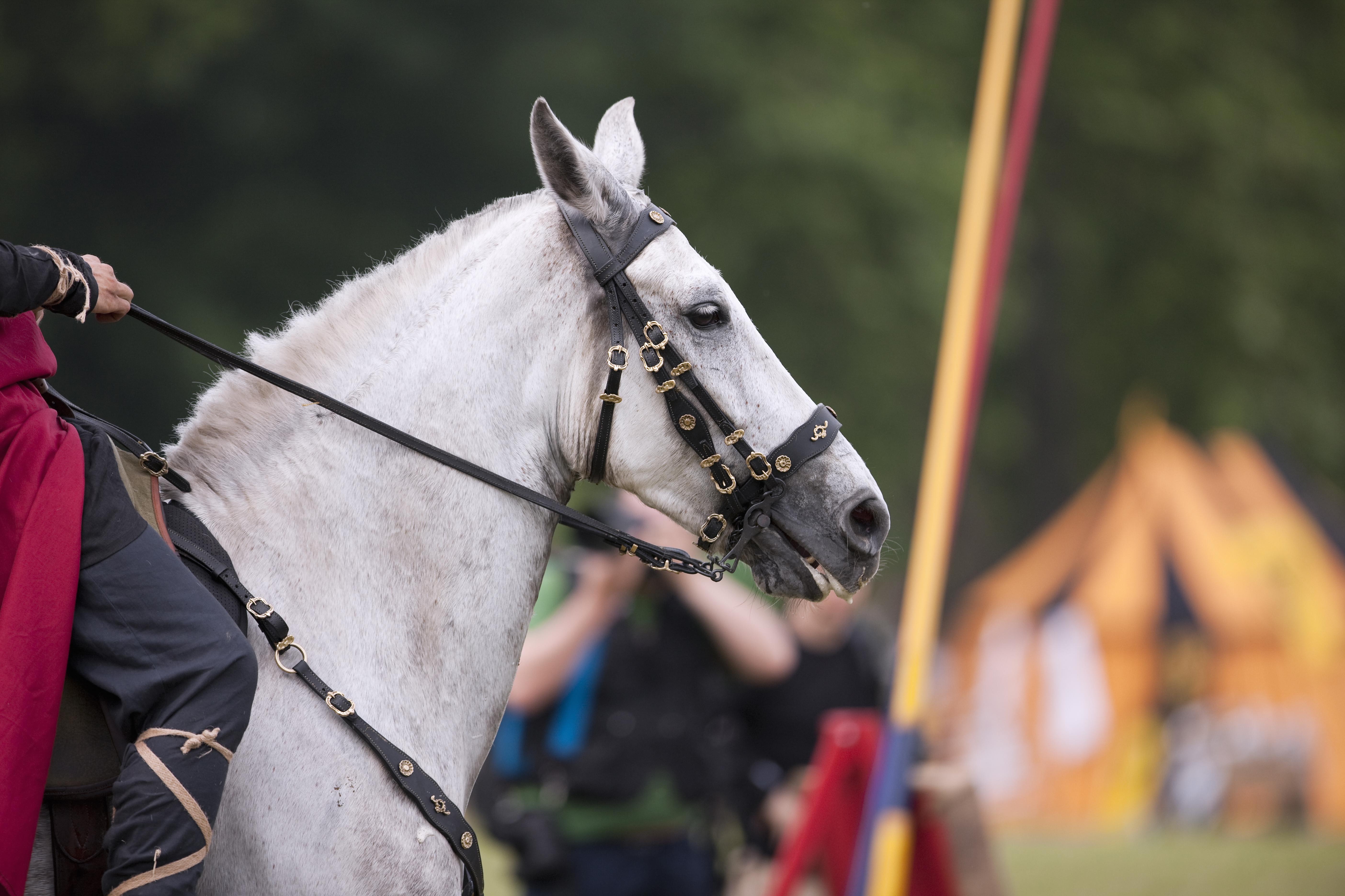 """Celebra la tradición medieval en la Fiesta de """"El Palio"""" - Italia Circuito Roma , Umbría y Toscana"""