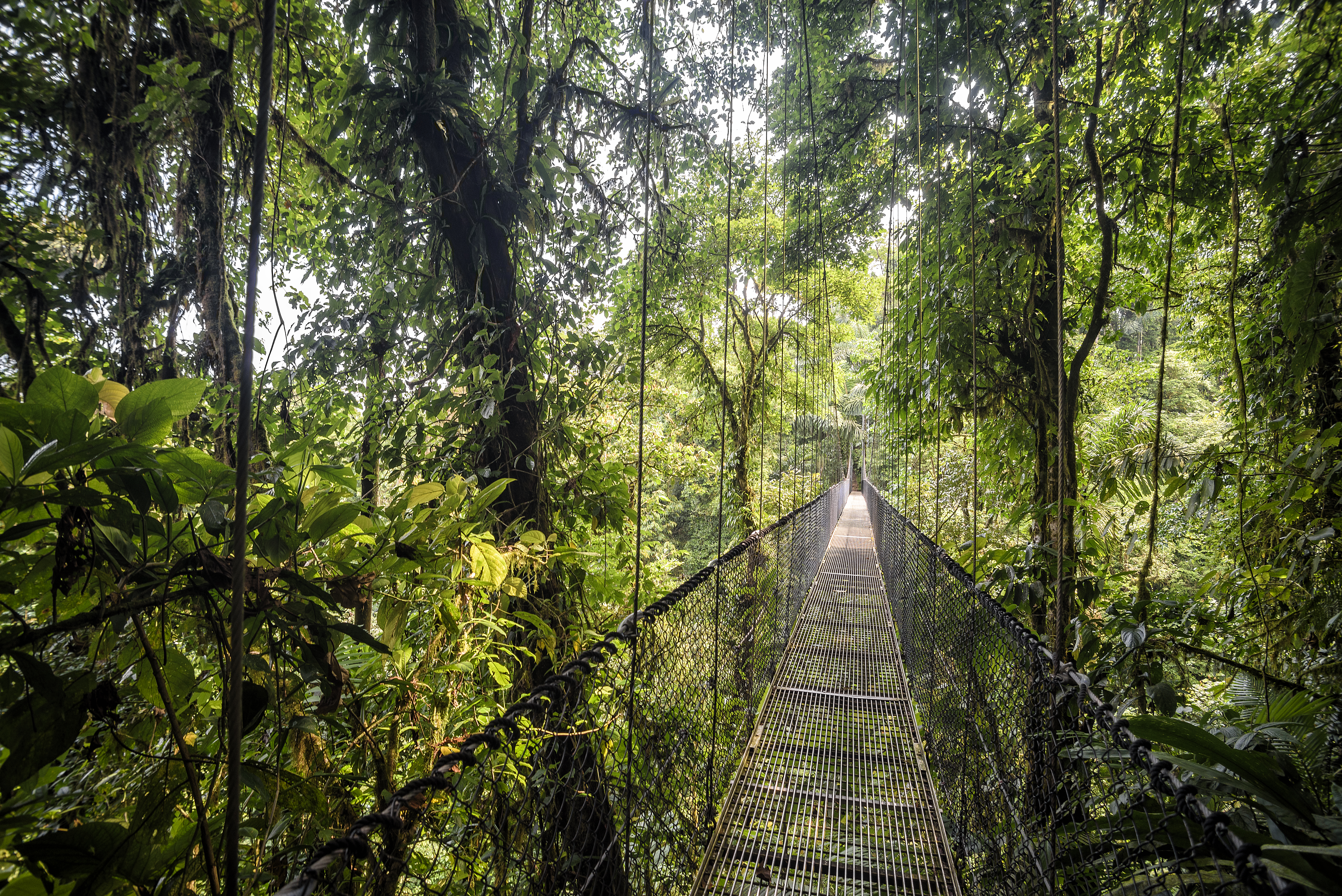 El paseo más emocionante por los Puentes Colgantes del Arenal - Costa Rica Gran Viaje Costa Rica Express con Manuel Antonio