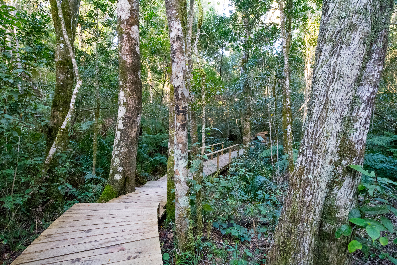El mejor epílogo a la Ruta Jardín - Sudáfrica Safari Kruger, Ciudad del Cabo y ruta Jardín