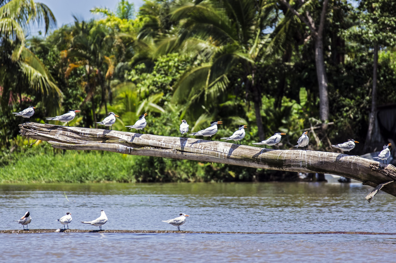 La mejor manera de observar la riqueza de Tortuguero - Costa Rica Gran Viaje Costa Rica Indispensable y Manuel Antonio