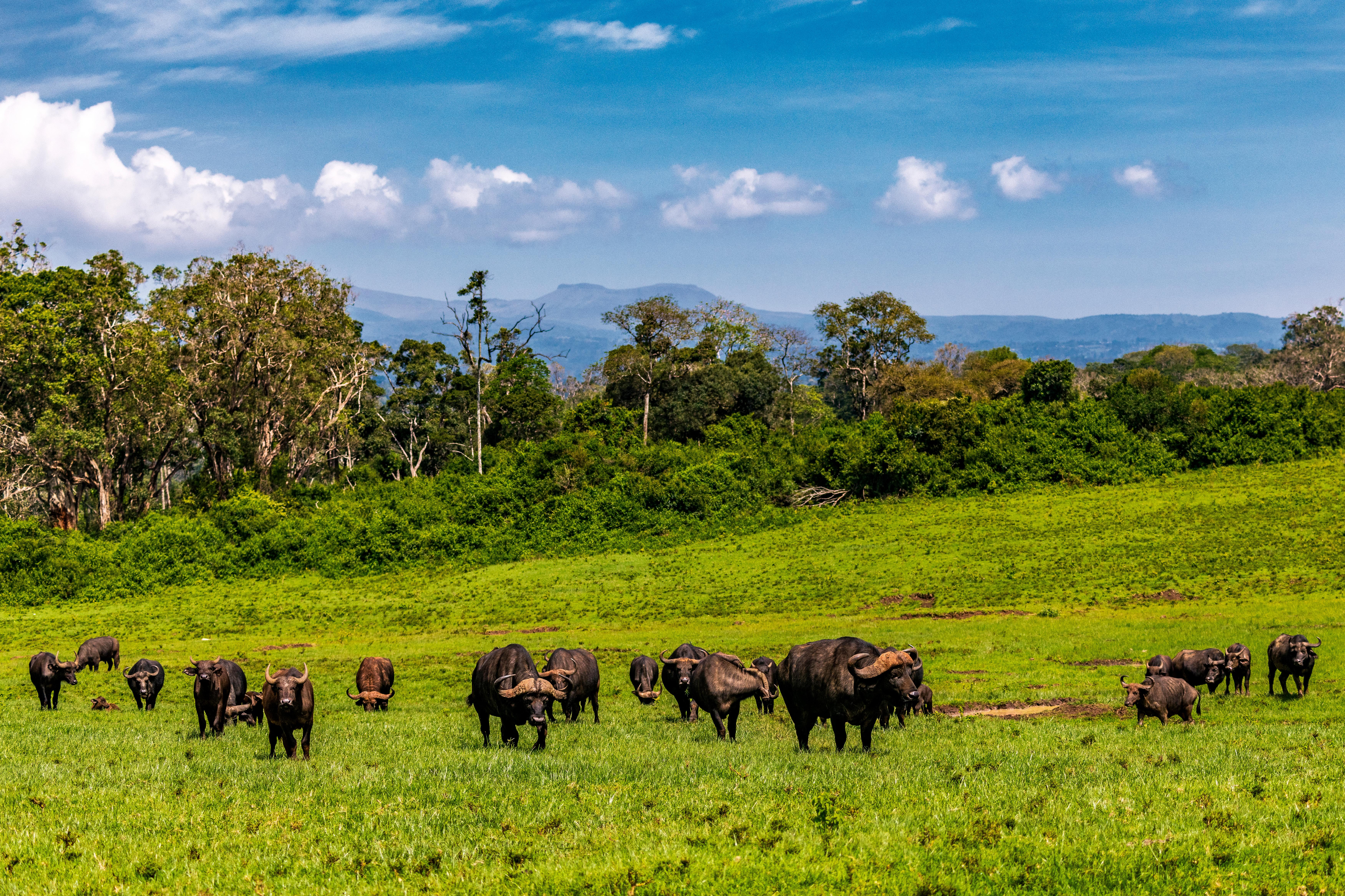 Adéntrate en los inspiradores paisajes de los Montes Aberdare - Kenia Safari Safari Kenia y Tanzania: Serengeti