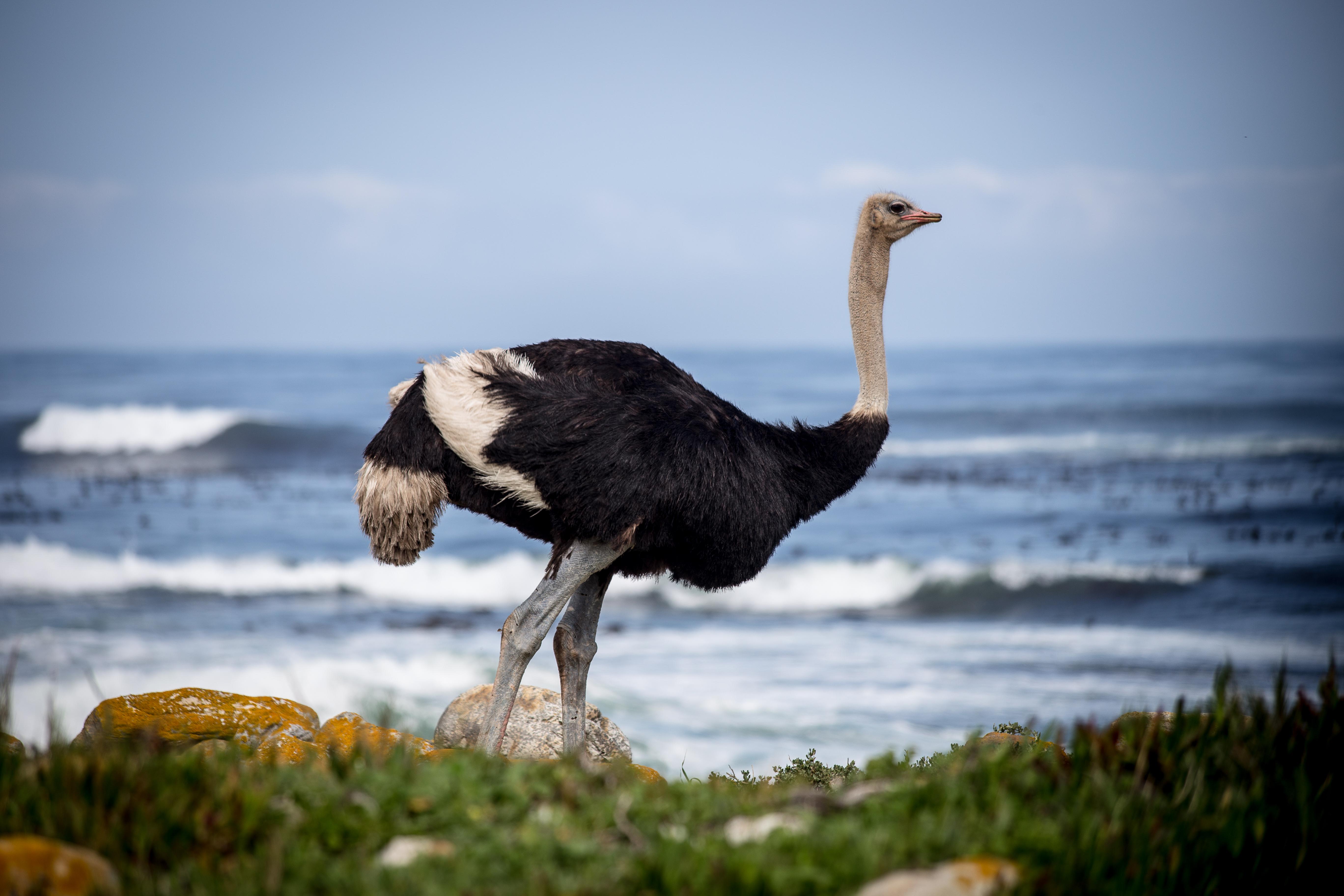 Bienvenidos a la capital de las avestruces - Sudáfrica Safari Kruger, Ciudad del Cabo y ruta Jardín