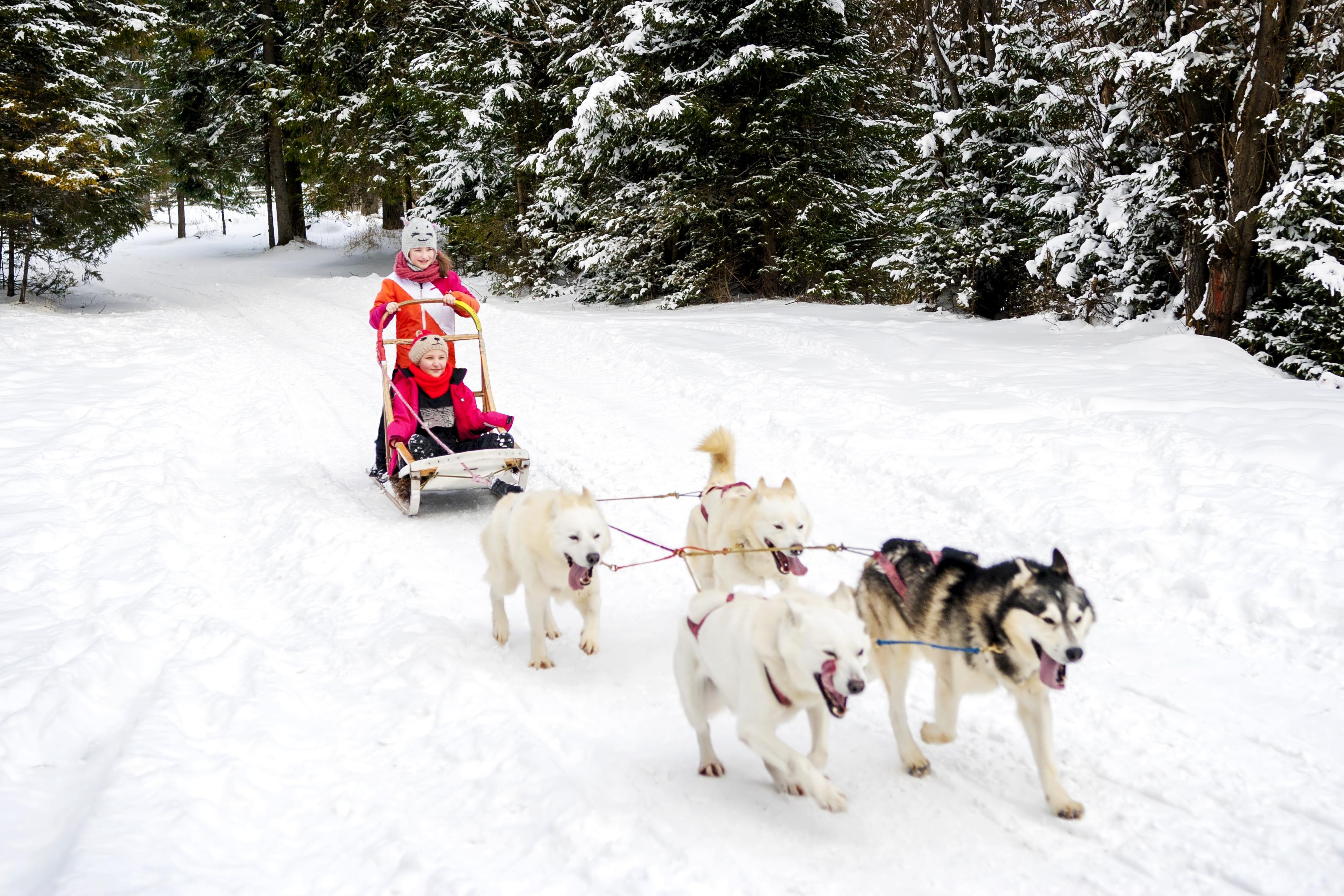 Un trineo con los adorables Huskies - Finlandia Circuito Laponia y Rovaniemi desde Málaga