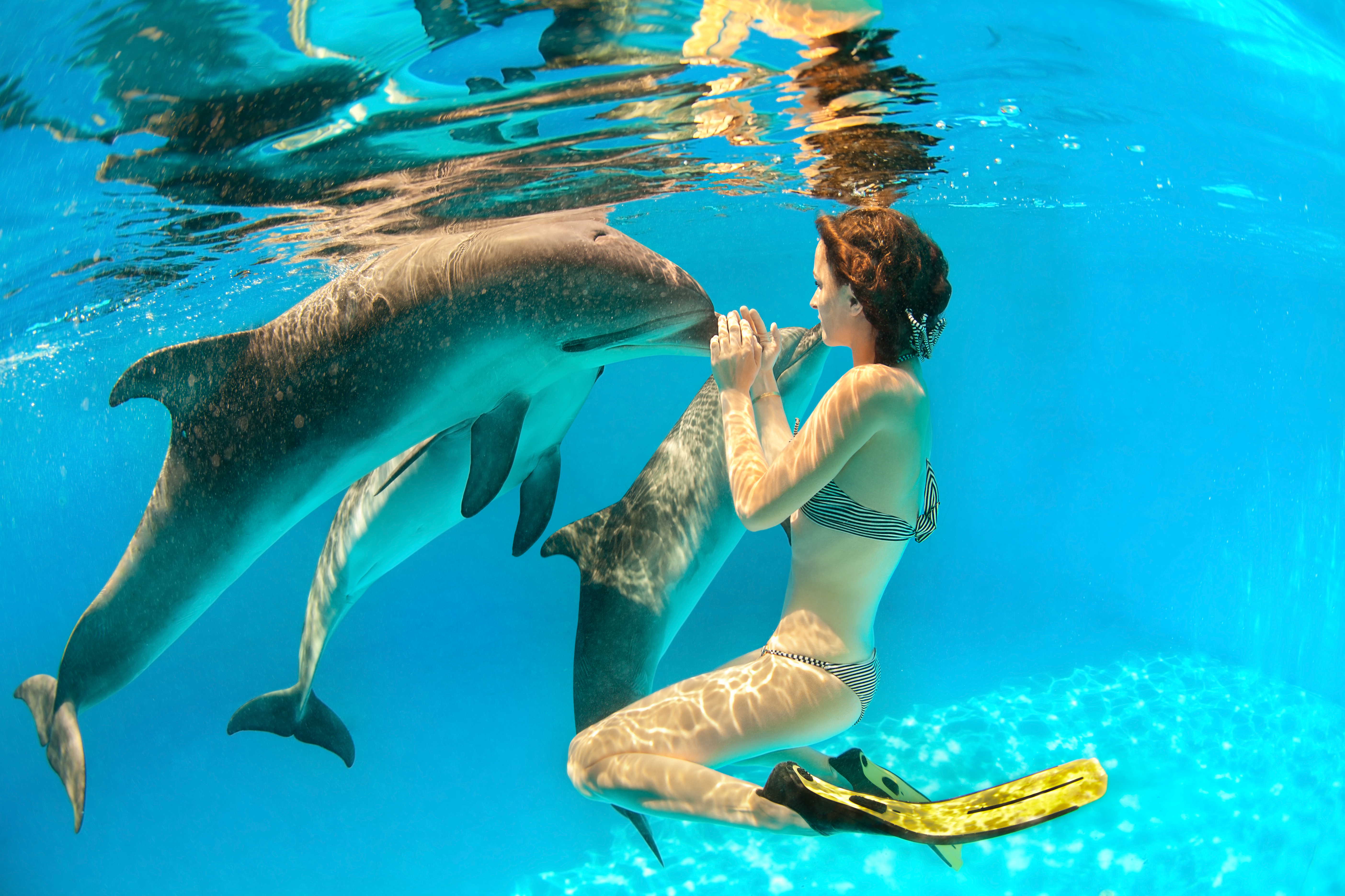 Nadando con delfines en la Riviera Maya - México Gran Viaje México Arqueológico: Aztecas y Mayas