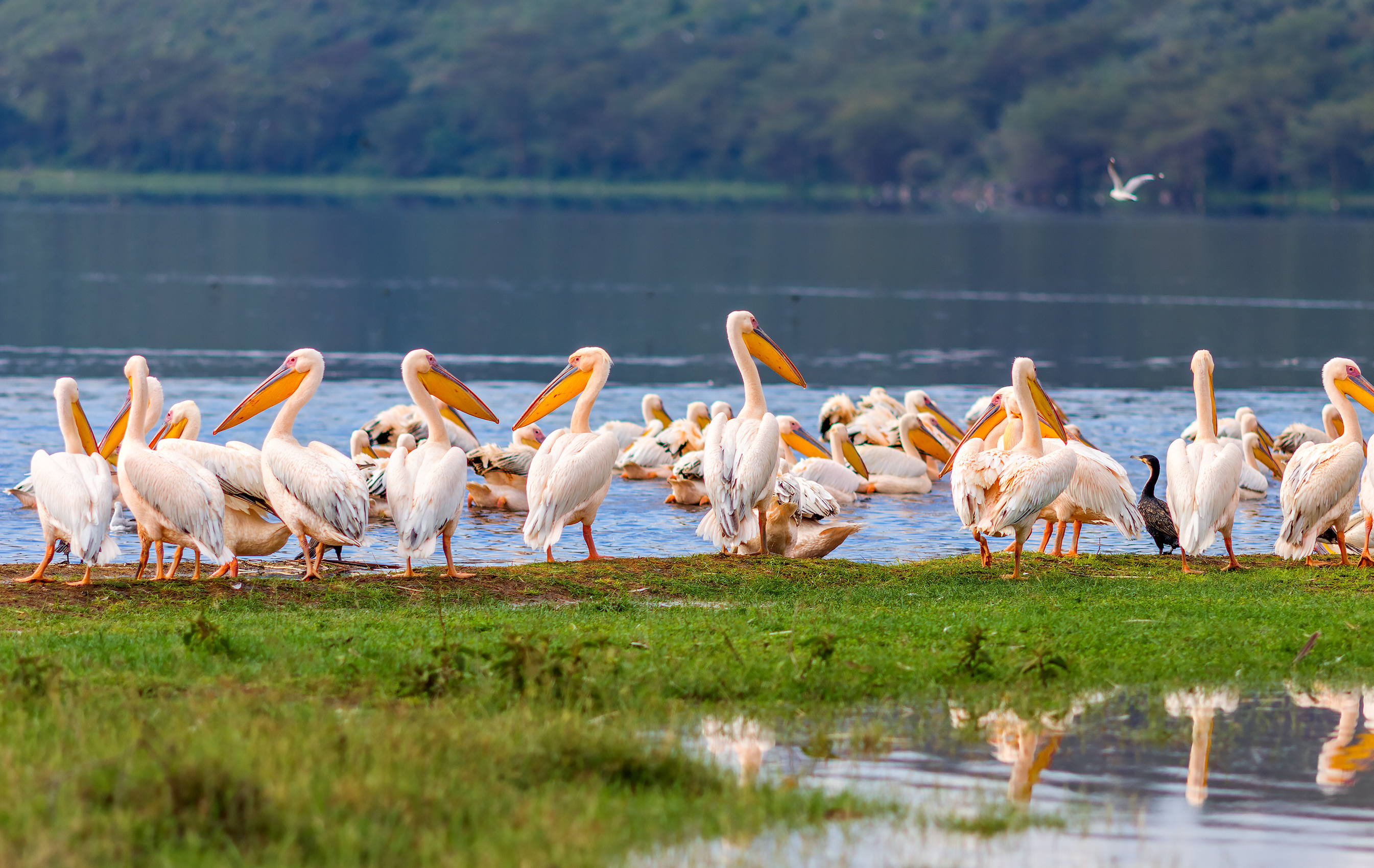 Explora uno de los lagos del gran valle del Rift - Kenia Safari Safari en Kenia: Parque Nacional de Tsavo