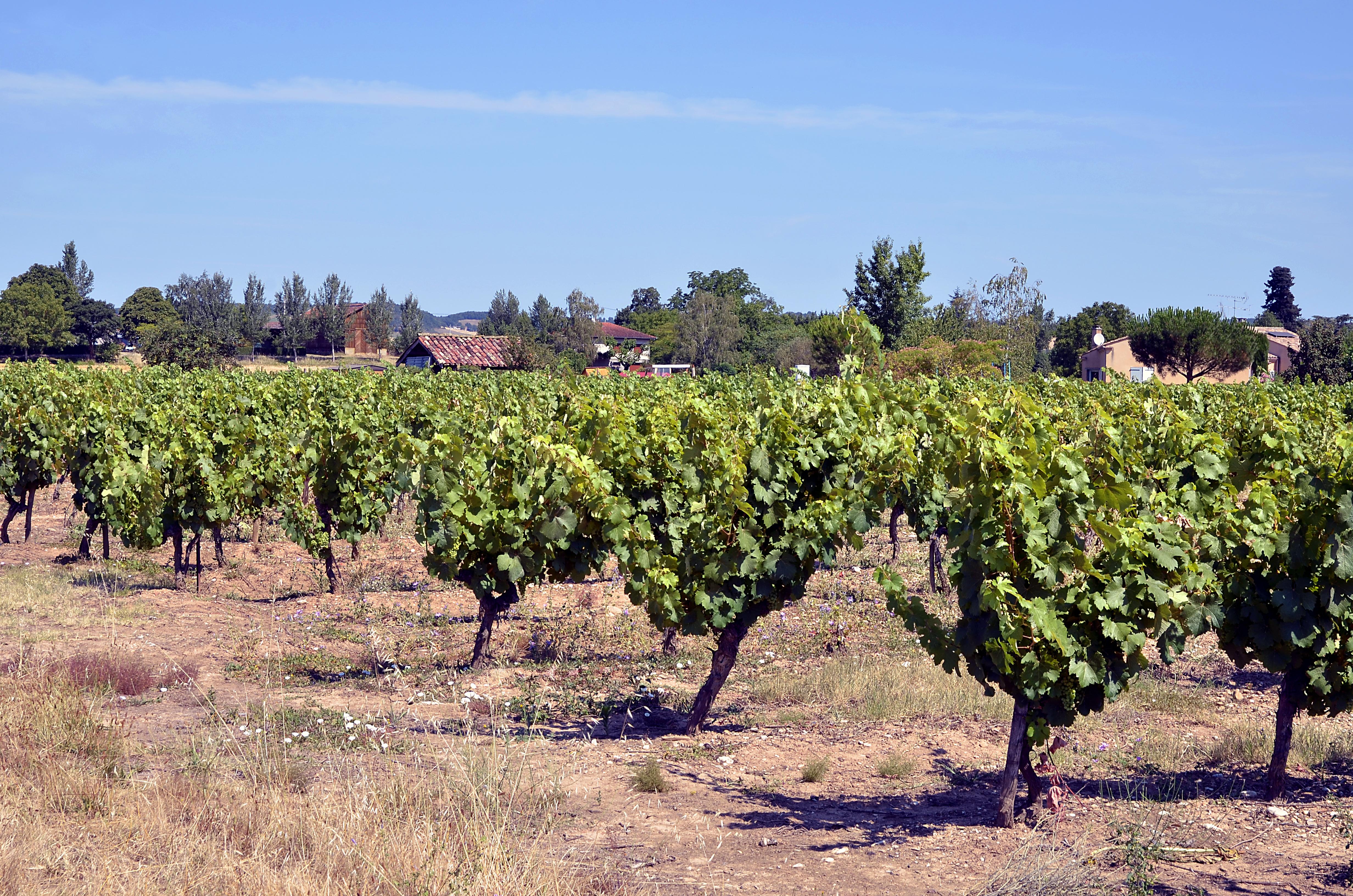 Prueba un auténtico vino francés en Gaillac - Francia Circuito Sur de Francia: de Aviñón a Toulouse