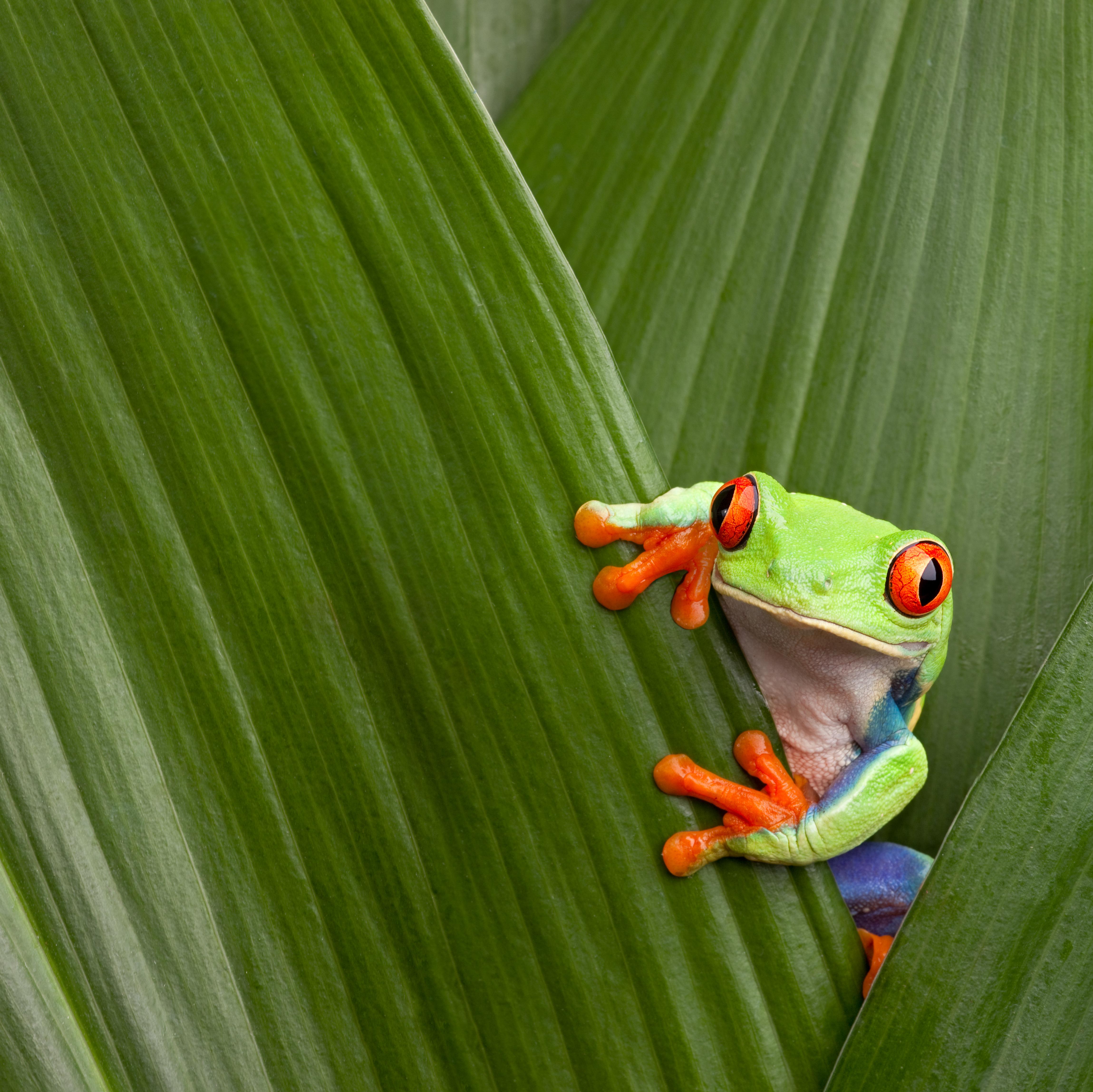 Visita el Bosque Eterno de los Niños, la reserva privada más grande del mundo - Costa Rica Gran Viaje Tortuguero, Arenal y Monteverde