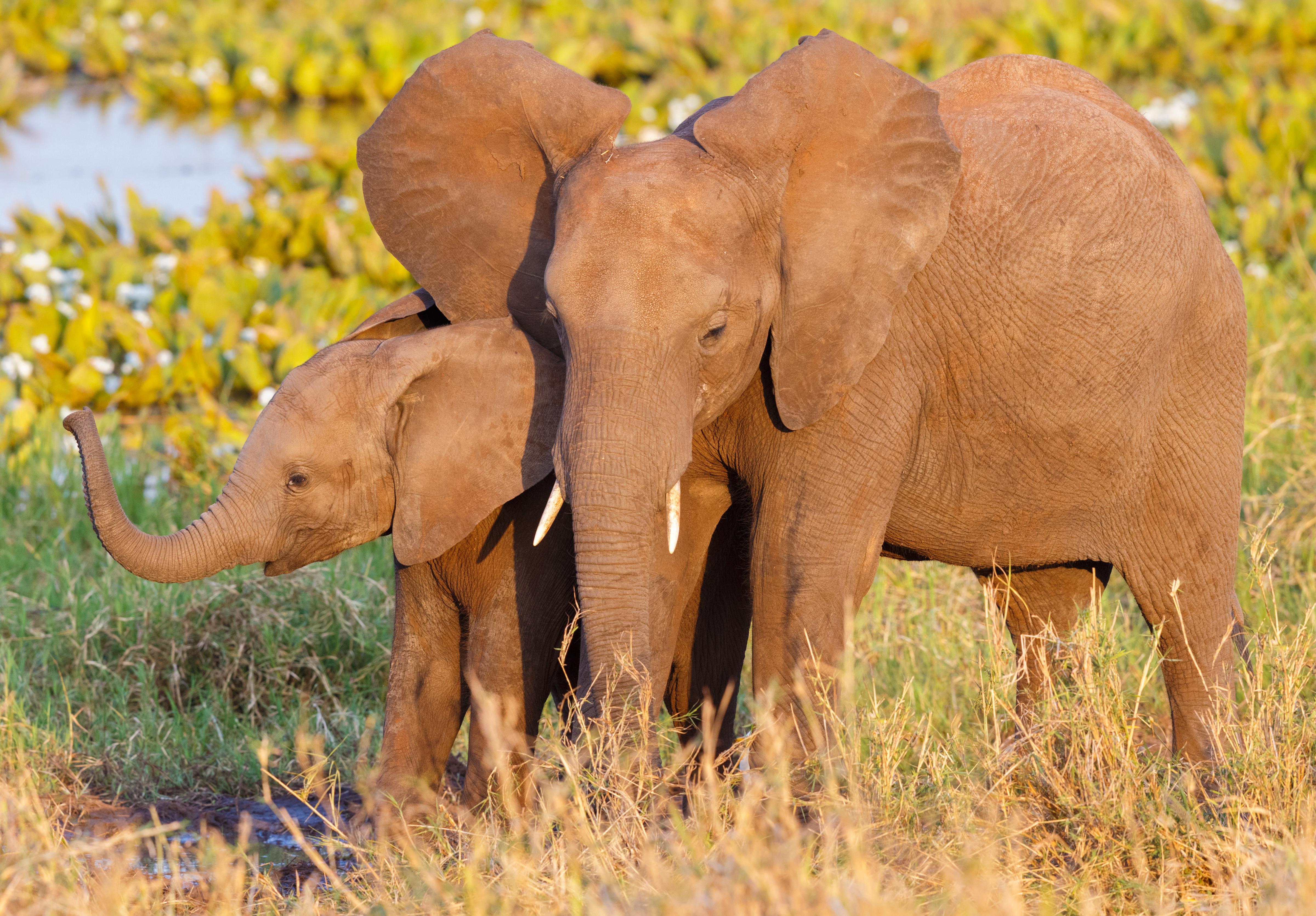 La mayor colonia de elefantes en Tanzania - Kenia Safari Safari Kenia y Tanzania: Ngorongoro