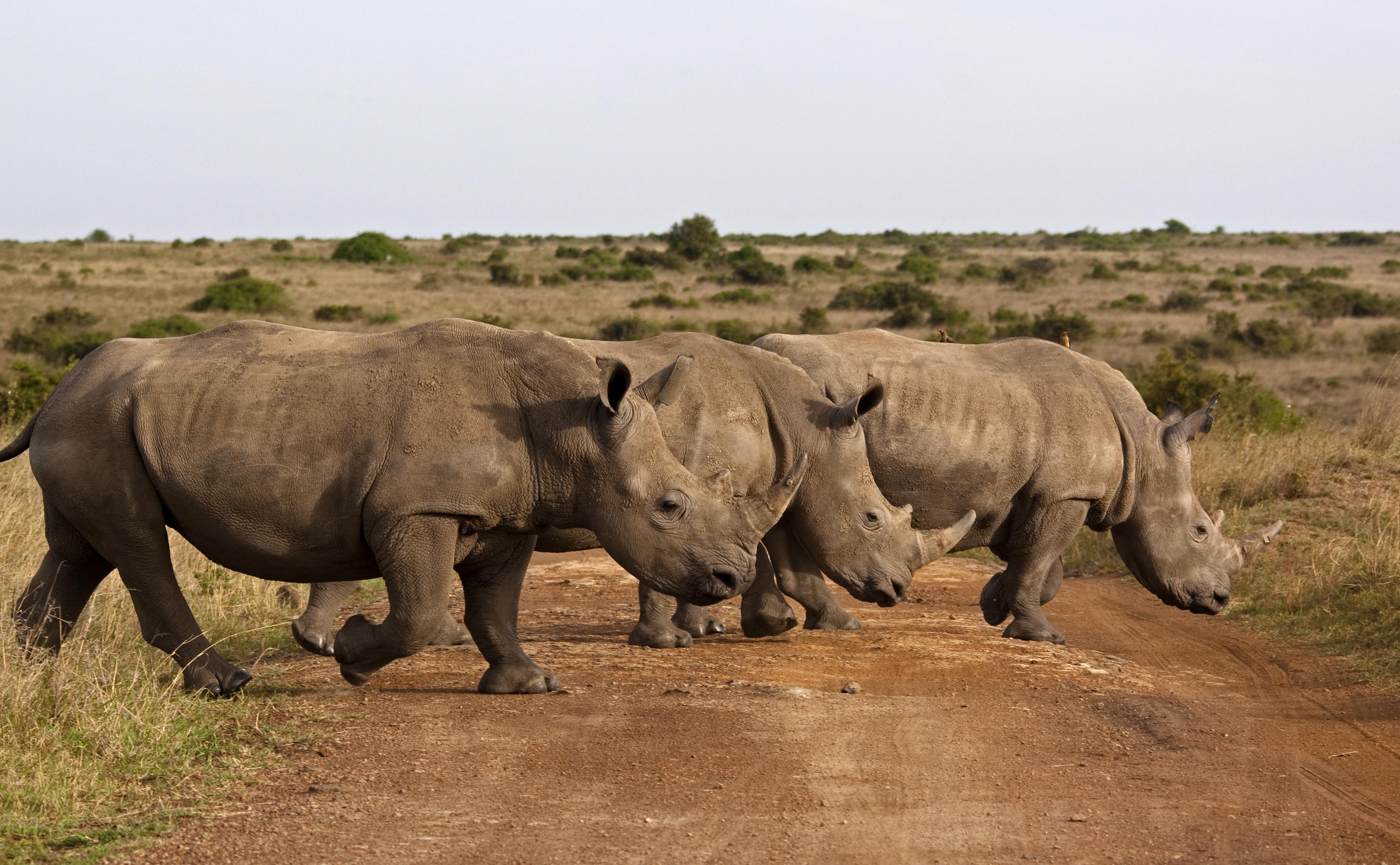 Visita el parque más antiguo de Kenia - Kenia Safari Safari en Kenia: Reserva Nacional Shaba
