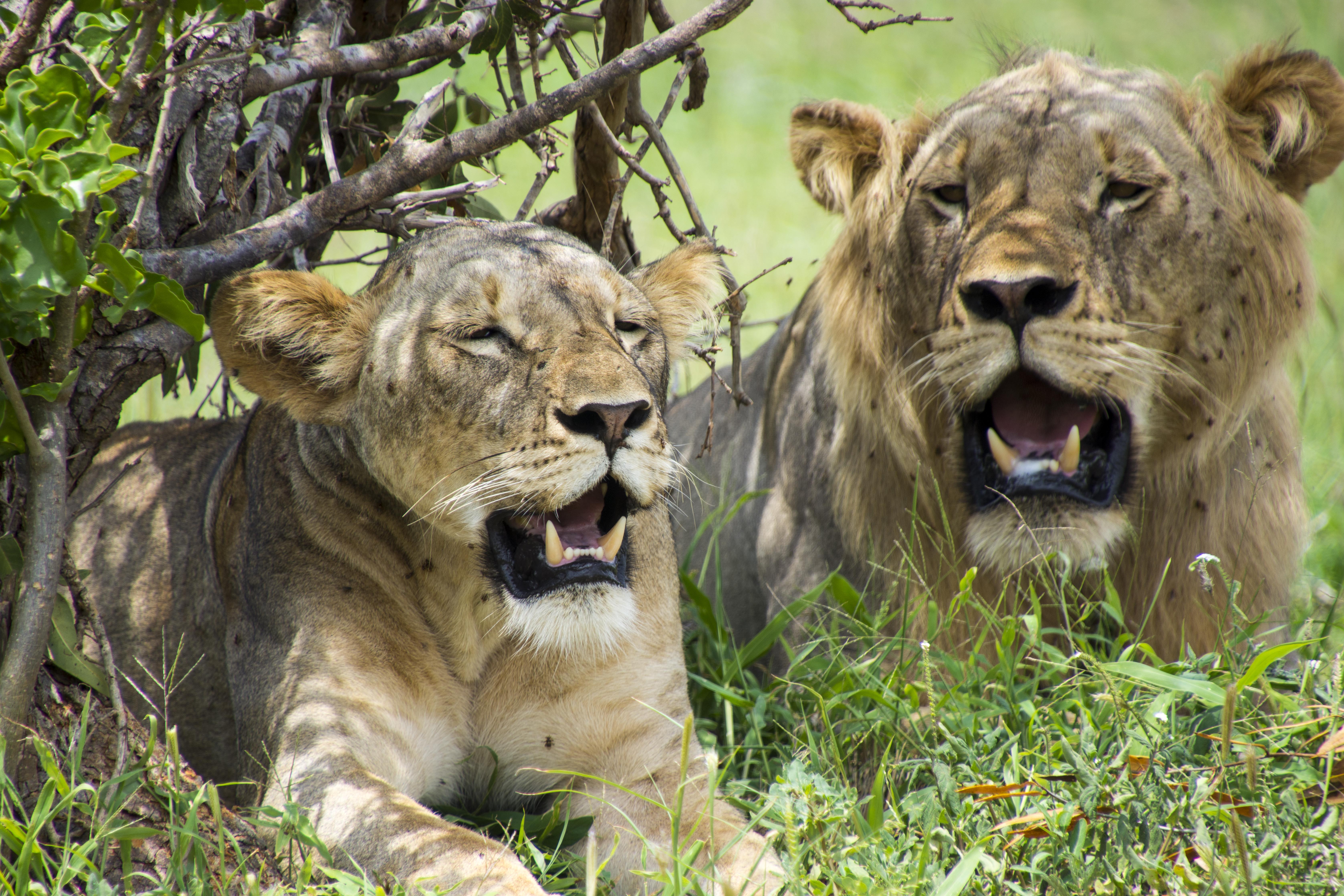 Disfruta de las maravillas que esconde el parque más extenso de Kenia - Kenia Safari Safari en Kenia: Parque Nacional de Tsavo