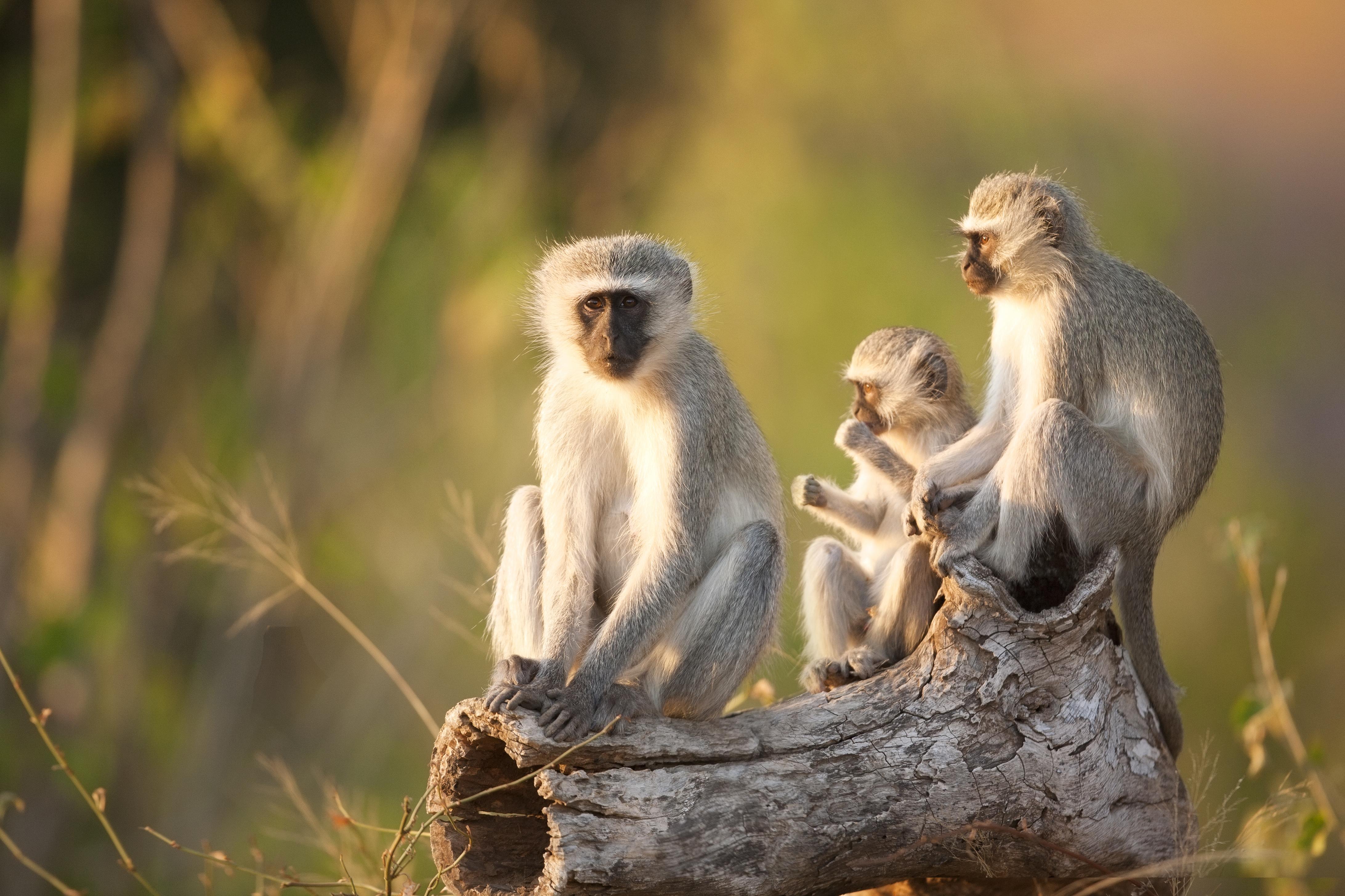 África mística y legendaria - Kenia Safari Safari Kenia y Tanzania: Ngorongoro