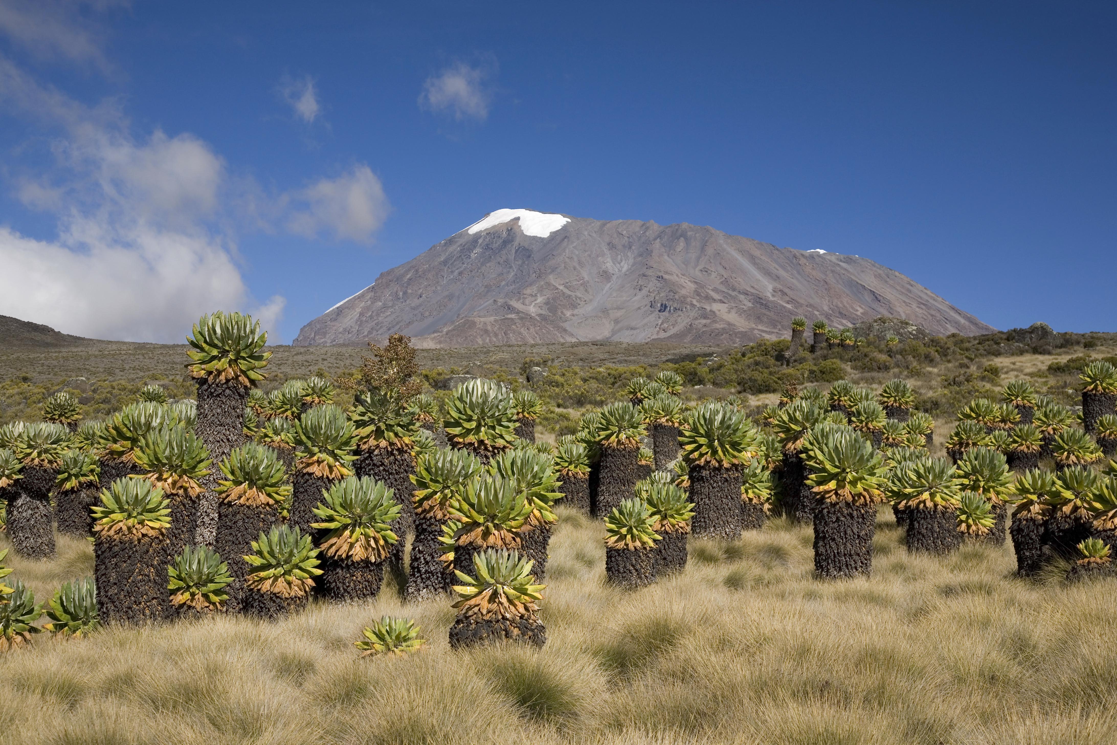 """La """"vuelta al mundo"""" en cinco días - Tanzania Gran Viaje Ascensión al Kilimanjaro: Ruta Marangu"""