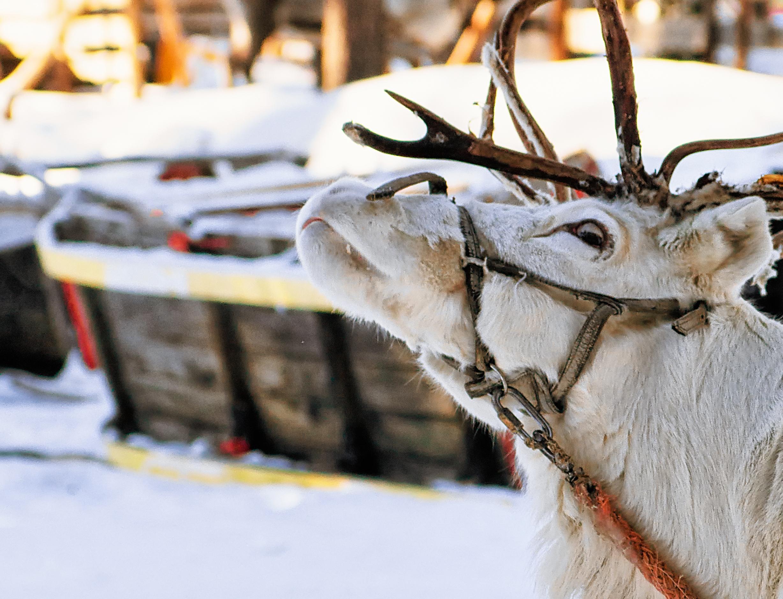 Vivir la experiencia de Papá Noel en su pueblo natal - Finlandia Circuito Escandinavia de Norte a Sur