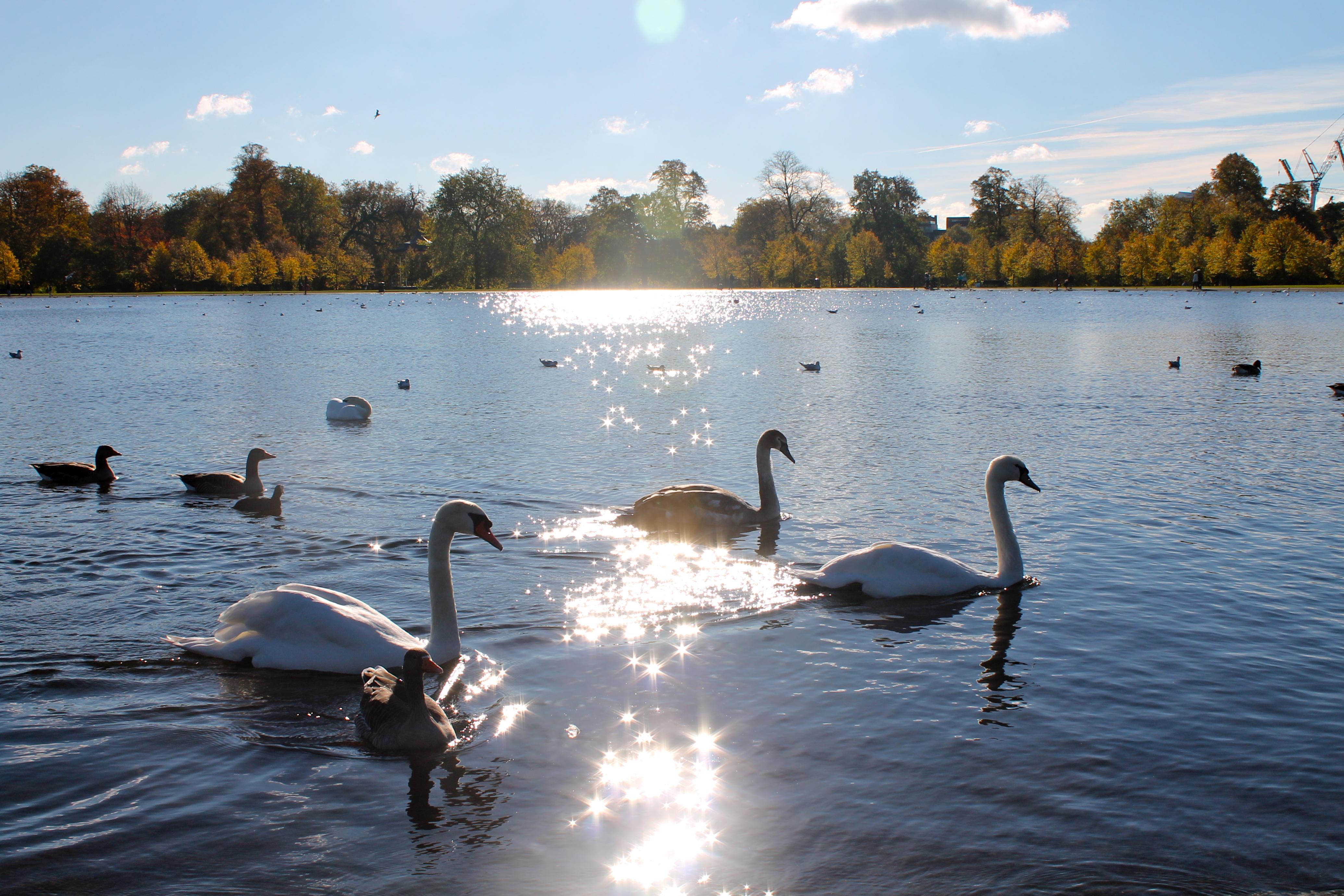 Londres, ciudad de parques - Bélgica Circuito Londres, Países Bajos y el Rhin